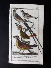 Buffon 1785 Antque Hand Colored Bird Print. Pitangua Shrike, Hoopoe etc 8-5